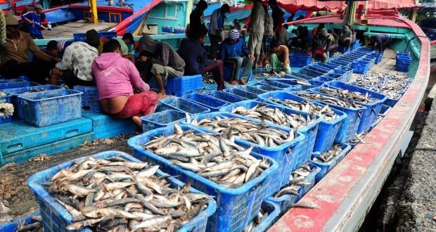 Target-Produksi-Ikan-060114-ol-4-620x330.jpg